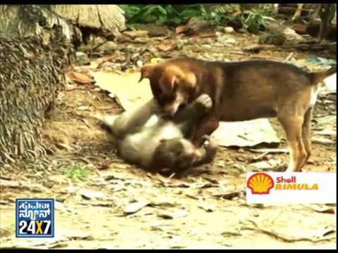 Amazing friendship between monkey and dog | monkey and dog funny videos
