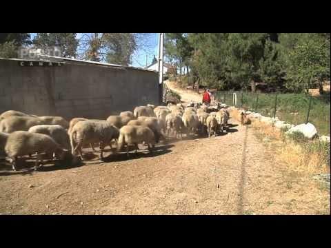 Produção de Carne em Torre do Pinhão