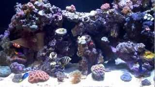 Innovative Marine 30 Gone, New 57 Aquatic Master Reef Tank