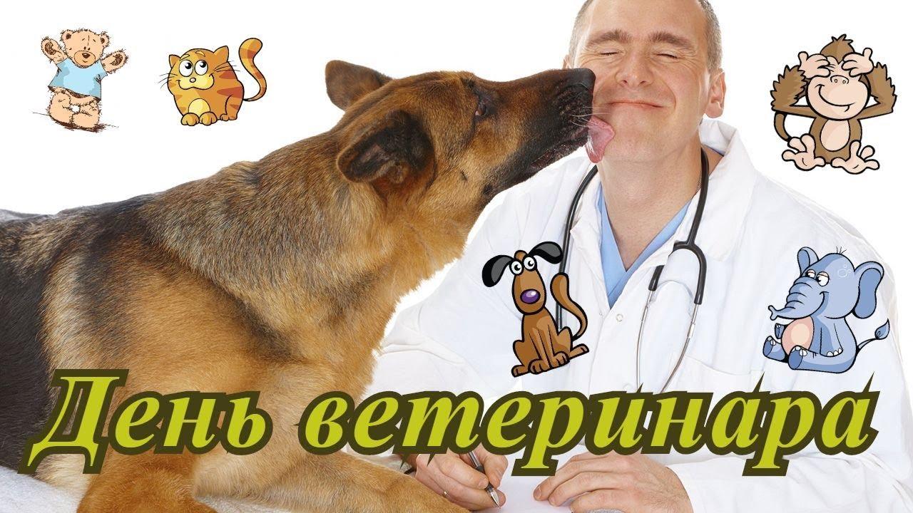 продумывать поздравления ветеринаров ветеринарами под