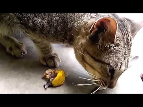Kucing berburu burung