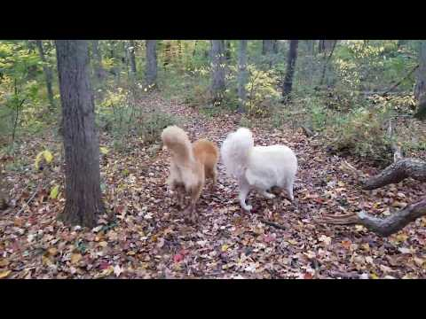 The Pack explores a new trail at Gedney Park