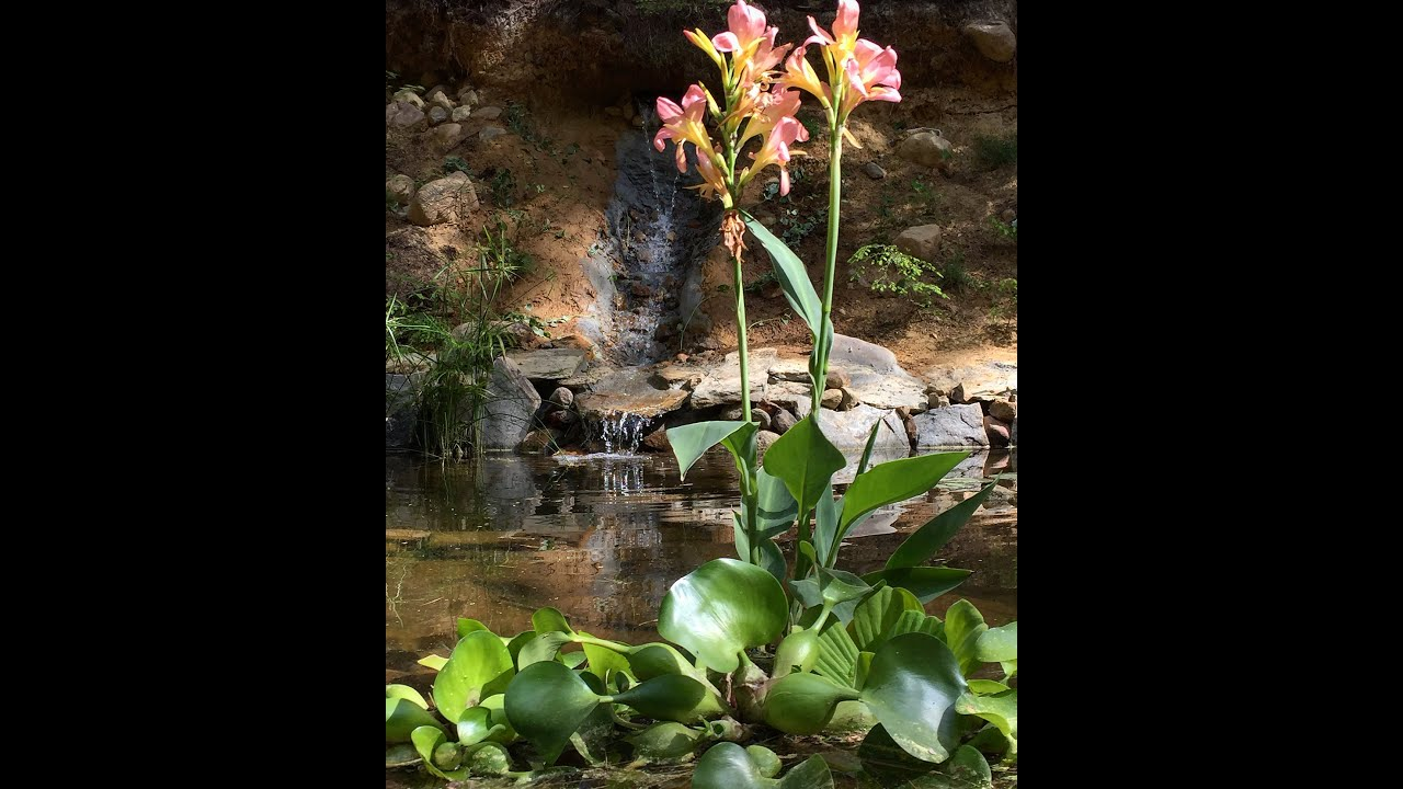 how to build a garden pond with waterfall youtube