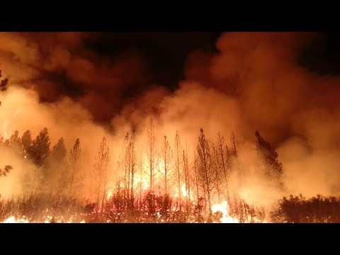This Deadly Tree Is Causing California's Wildfires