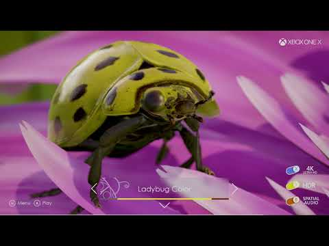 Introducing Insects, an Interactive Ultra HD, HDR Experience