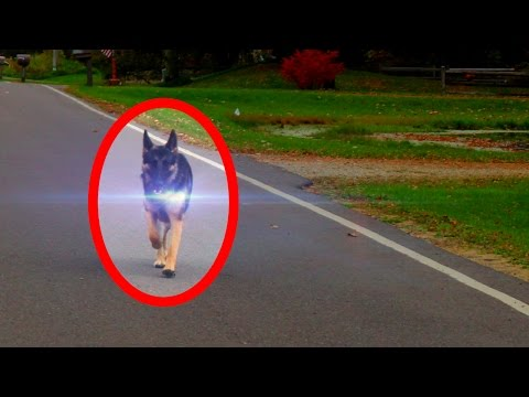 5 Animal Teleportations Caught on Tape