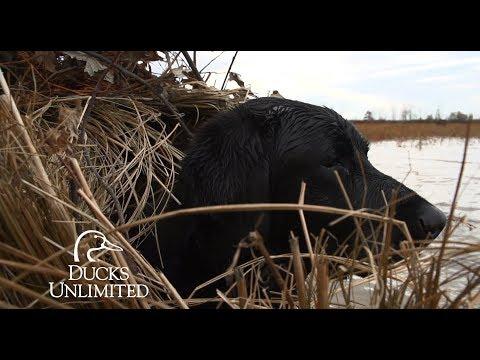 DU TV 2016 Episode 7: Missouri/Kentucky