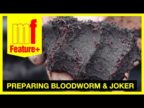 Preparing bloodworm and joker – Jason Cunningham on the Coventry Canal