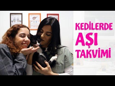 Kedilere Yapılması Gereken Aşılar (Aşı Takvimi)