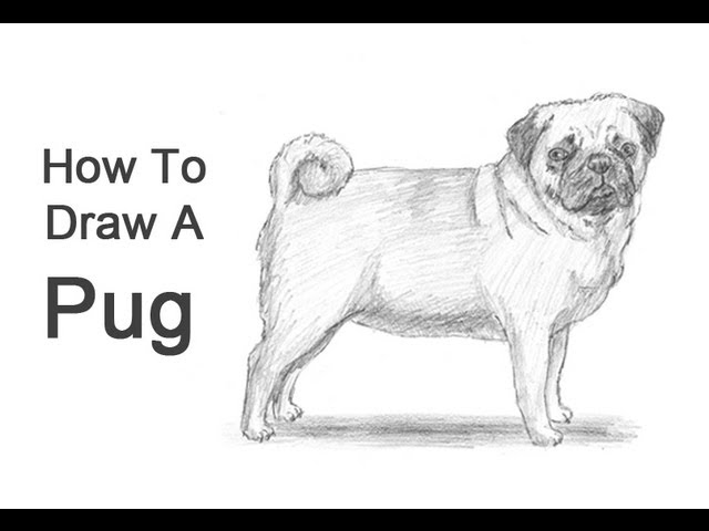 How To Draw A Dog Pug