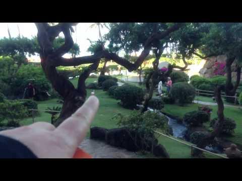 Grand hyatt maui