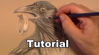 How to draw a Crow animal drawings / #36