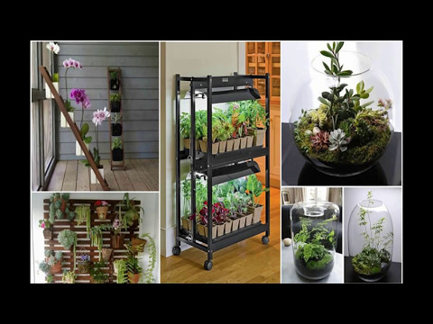 Indoor Decorative Plants | Indoor Plants | Indoor Garden | 16 | Ideas