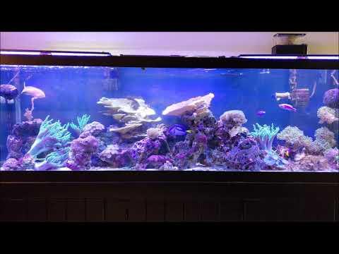 NO Sump = No Problem Reef Tank Methods