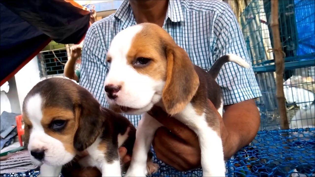 At Galiff Street Pet Market Kolkata