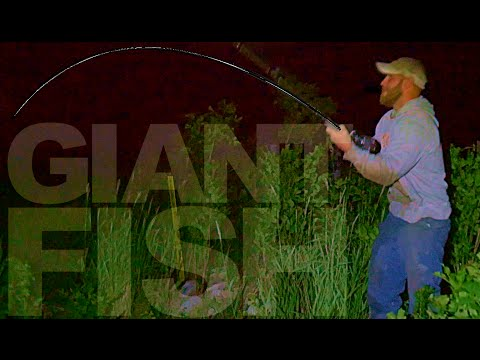 Creek Fishing for River Monsters - GIANT CATFISH!!