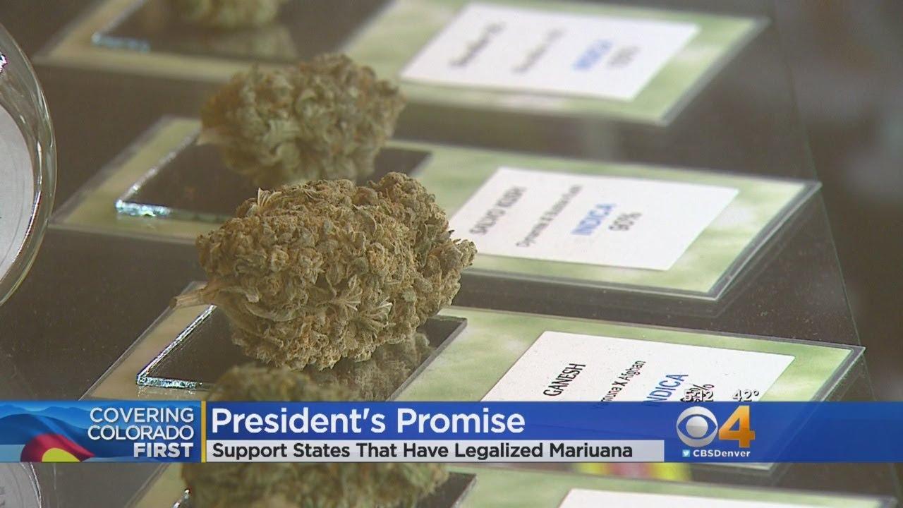 Sen. Gardner Says Trump Vows To Protect Marijuana Industry