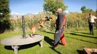 K9 Training With James