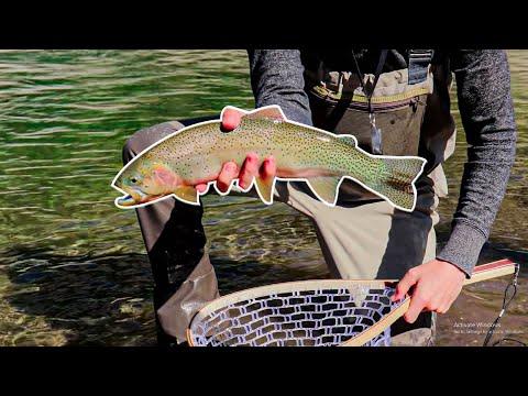 Eager Cutthroats: Fly Fishing Alberta Streams [Old Man River Near Calgary]