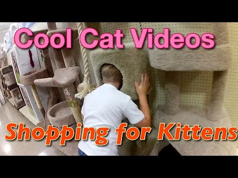 Shopping for Kitten Supplies | We are getting a CAT! | Cool Cat Videos