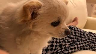 https://goo.gl/A7yMtB 犬のしつけに困っているなら絶対コレ 犬を飼い始...