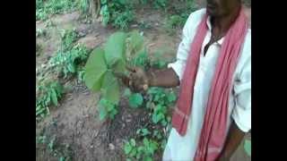 Botanicals from Pankaj Oudhia