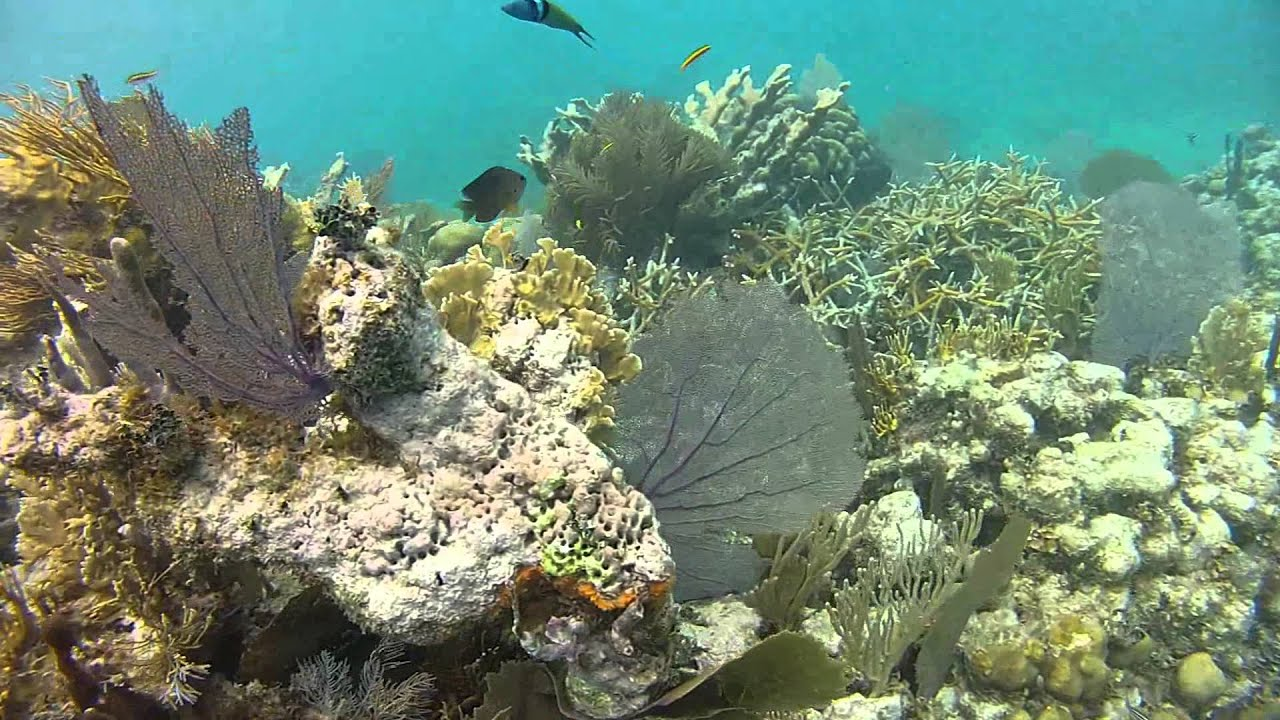 Snorkeling Coral Gardens Belize Hd Youtube