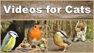 Videos for Cats to Watch - The NEW Ultimate Birds and Squirrels Compilation Video(Videos for Cats to Watch - The NEW Ultimate Birds and Squirrels Compilation Video - Over 2 Hours Video Produced by Paul Dinning - Wildlife in Cornwall., 2016-03-14T21:08:29.000Z)