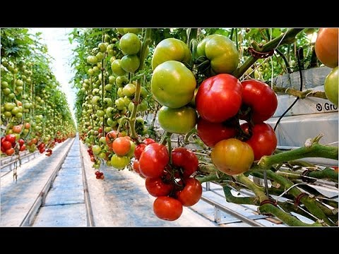Balcony decoration ideas with vegetable gardening- Dubai, UAE