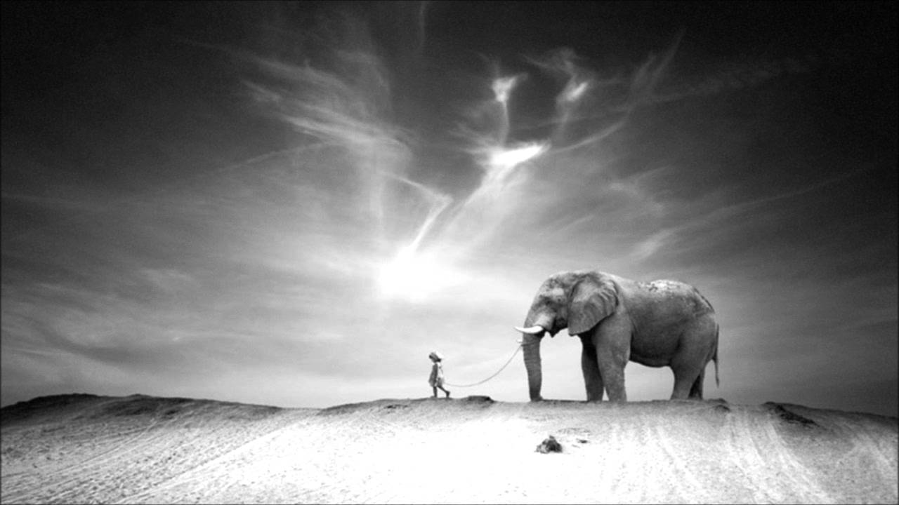 black and white photography elephants