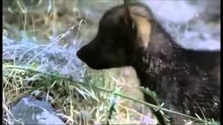 Cuento de lobos, Trailer
