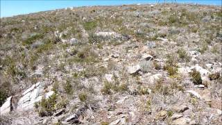 Climate change impacts on Australian alpine flora - drought might be as important as climate warming
