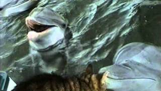 Download Cat and Dolphins playing together Mp3 and Videos