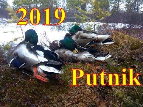 Весенняя охота 2019 г.