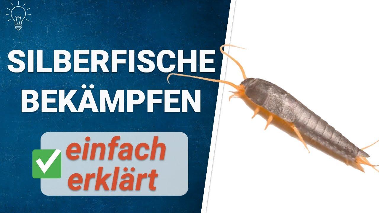 Silberfische in wenigen Schritten bekämpfen!  Futura GmbH