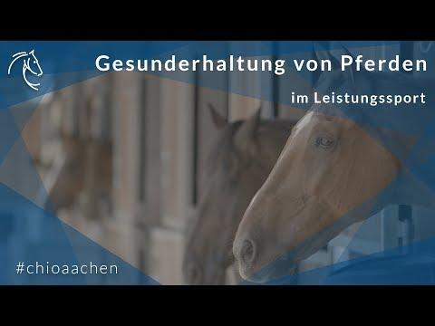 Pferdemanagement im Leistungssport - CHIO-Chef-Tierarzt über die optimale Gesunderhaltung