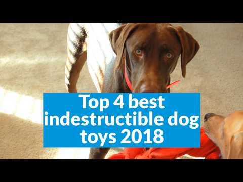 top-4-best-indestructible-dog-toys-2018-(buying-guide)