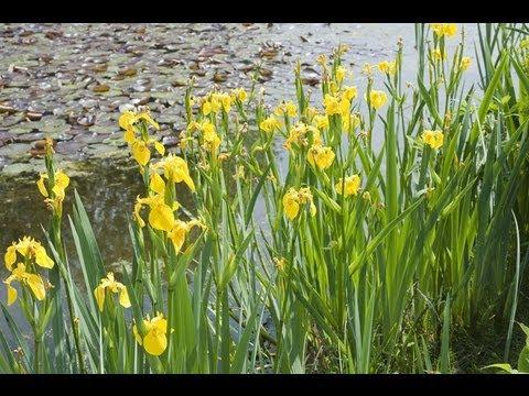 Fleurir le pourtour d 39 un bassin youtube for Fleurir son jardin