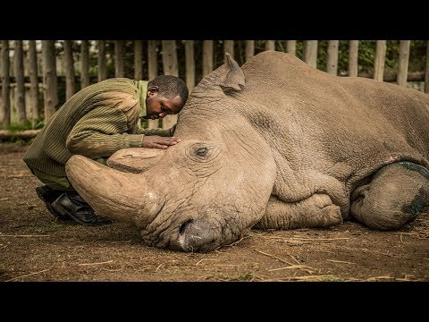 RIP Sudan :( - The Last Male Northern White Rhinoceros  (1973–19/03/2018)