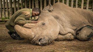 RIP Sudan :( - The Last Male Northern White Rhinoceros  (1973–19/03/2018)