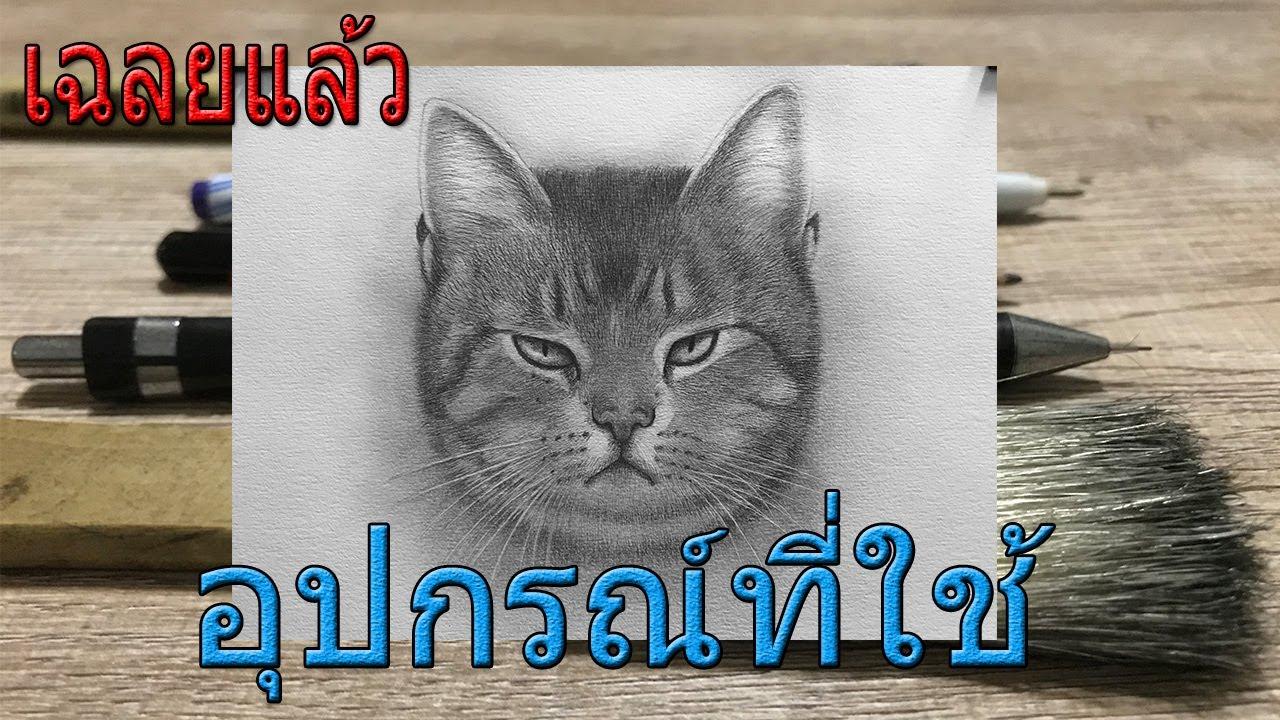 วิธีวาดรูปแมวให้เหมือนจริงและอุปกรณ์ที่ใช้
