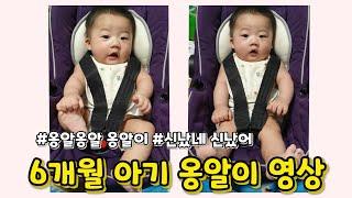  6개월 아기 영상 바구니카시트 아기 카시트 아기 옹알…