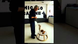 Dog Obedience Training | Chicago, Il – Chicago Canine Academy