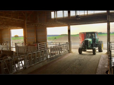 First Load Of Feed Going Into New Addition. Feeding Cows