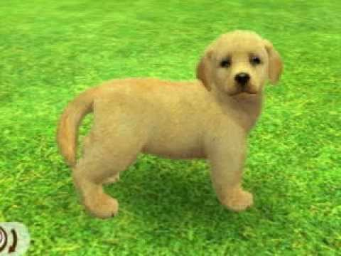 Nintendogs Cats Golden Retriever Youtube