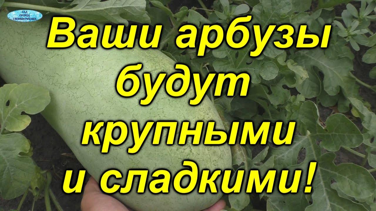 Вот почему у нас всегда самые сладкие арбузы!