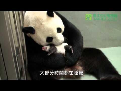 世上只有媽媽好 The Best Mom (English Subtitle Available)