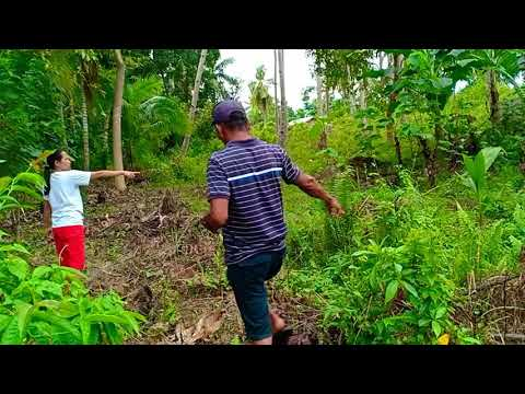Land Property For Sale in Bohol (Good Investment for 900K Prize)