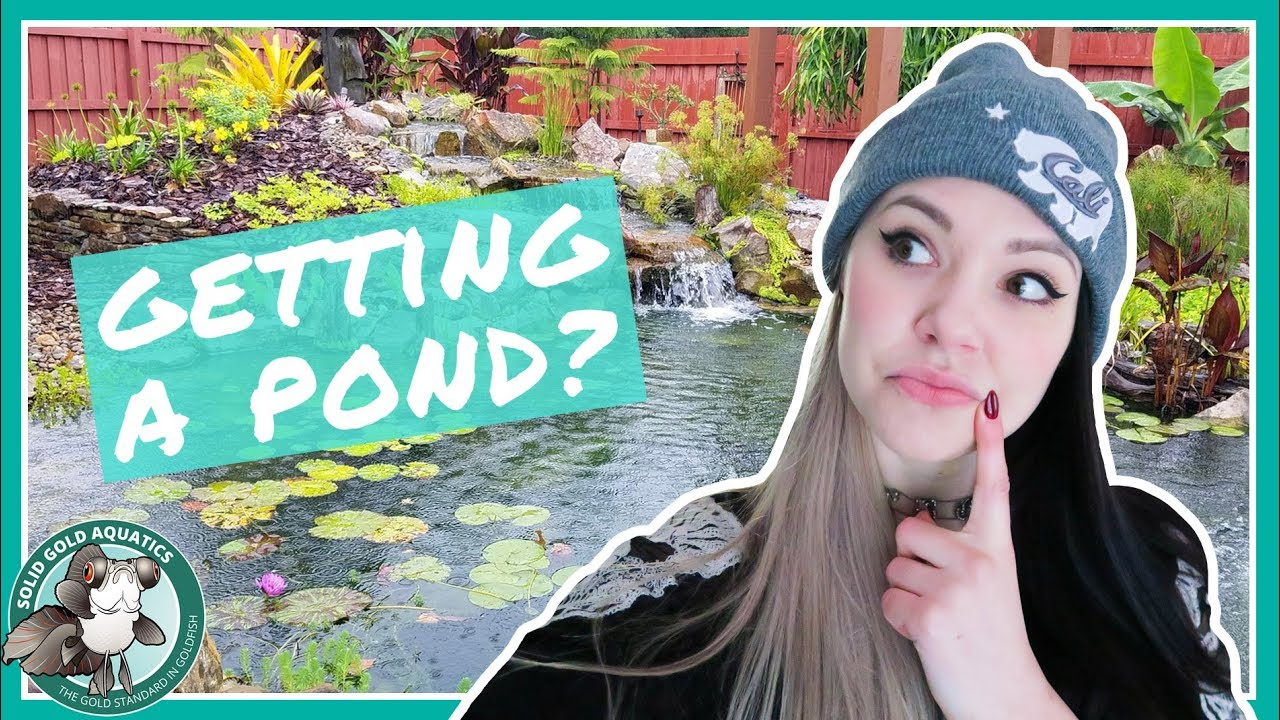 should-i-get-a-pond