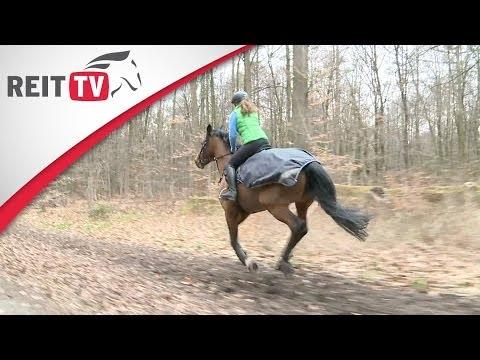 """Kenzie Dysli """"Motiviere Dein Pferd - Der Weg zur Freiheitsdressur u. Zirzensik"""" Teaser from YouTube · Duration:  4 minutes 8 seconds"""